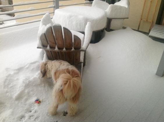Terasa in vrtno pohištvo iz tikovine je lahko pod snegom.